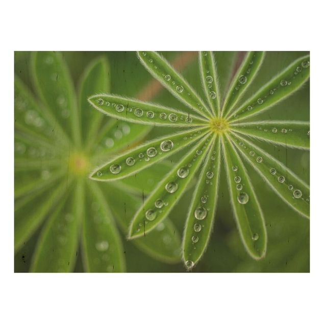 Holzbild - Morgentau auf Lupinenblättern - Querformat 3:4