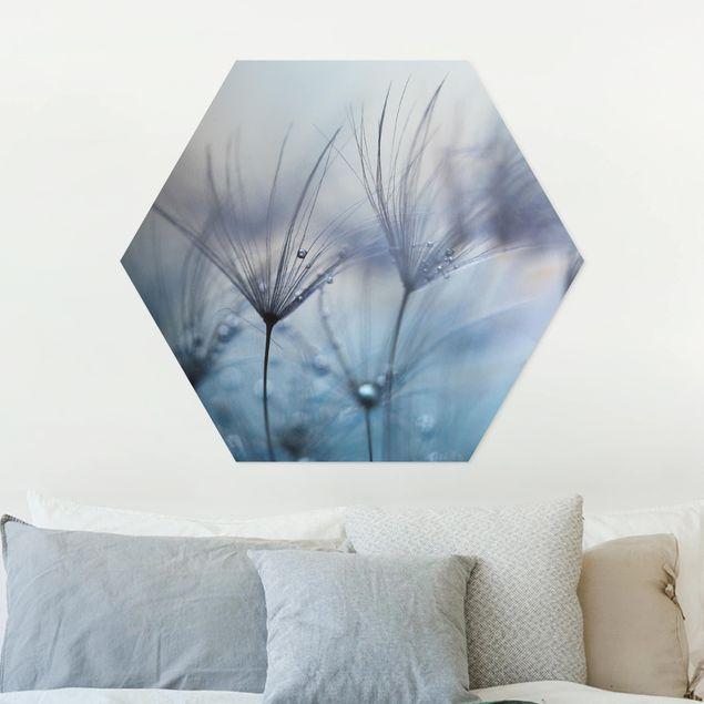Hexagon Bild Forex - Blaue Federn im Regen