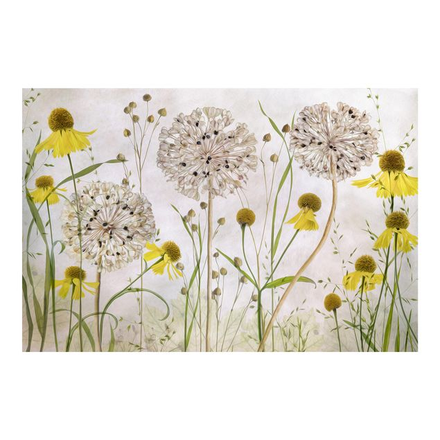 Fototapete - Allium und Helenium Illustration - Fototapete