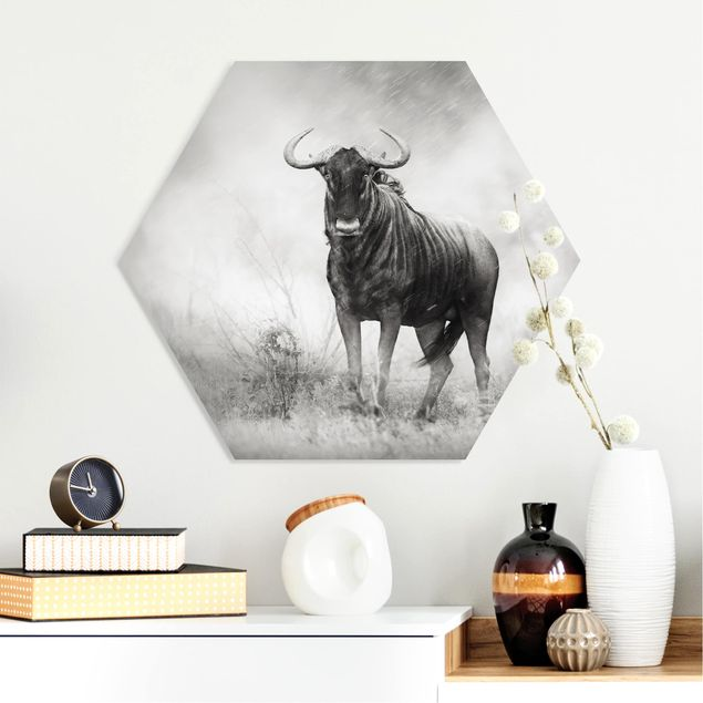 Hexagon Bild Forex - Staring Wildebeest