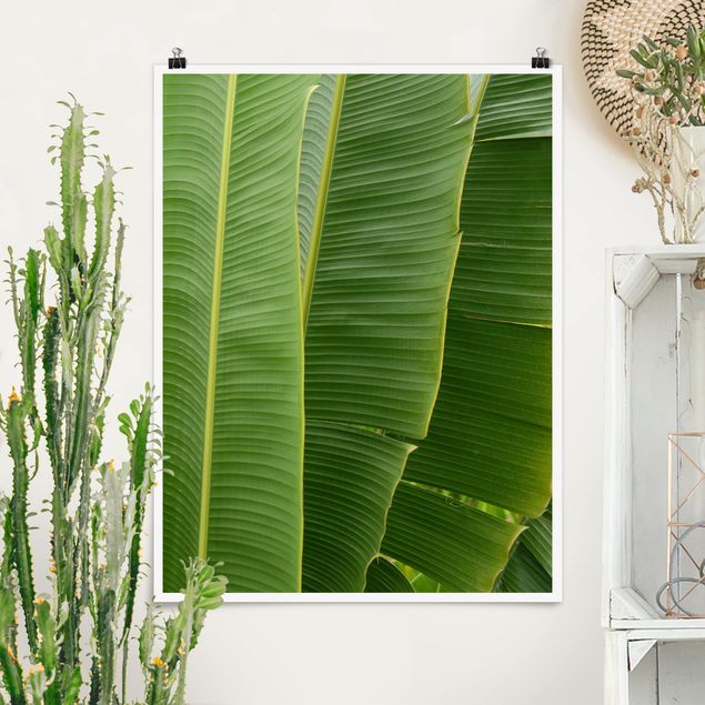 Poster - Banana Leaves - Hochformat 3:4