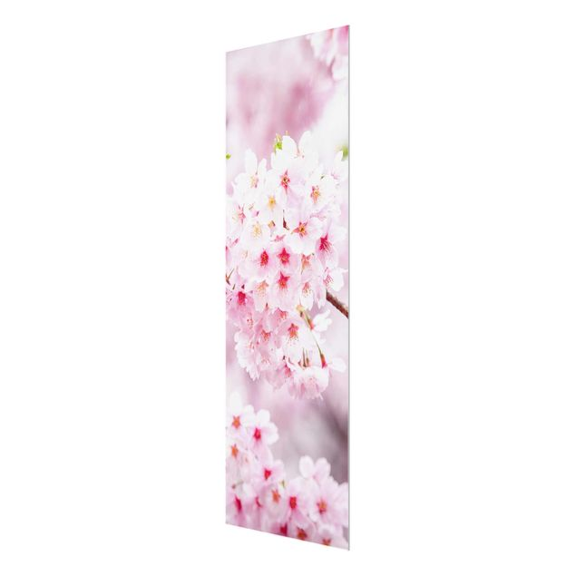 Glasbild - Japanische Kirschblüten - Panel
