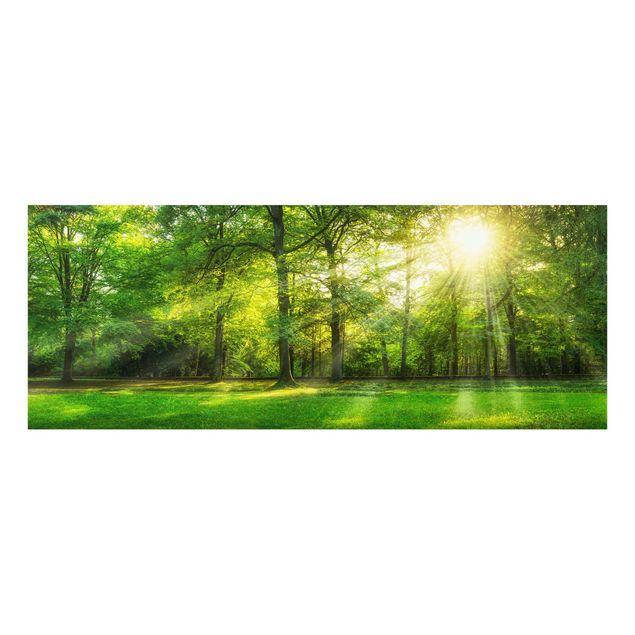 Glasbild - Spaziergang im Wald - Panorama
