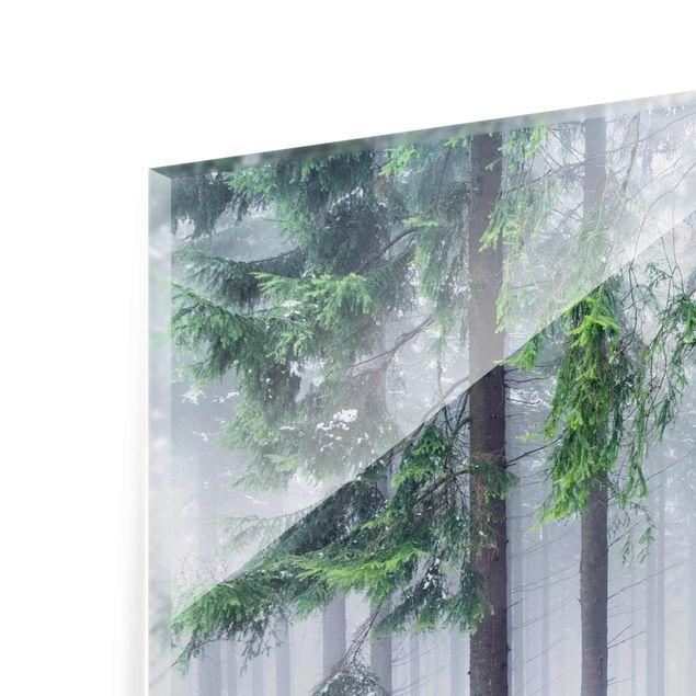 Glasbild - Nadelbäume im Winter - Querformat 4:3
