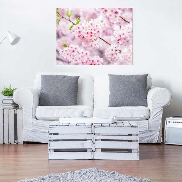 Glasbild - Japanische Kirschblüten - Querformat 4:3