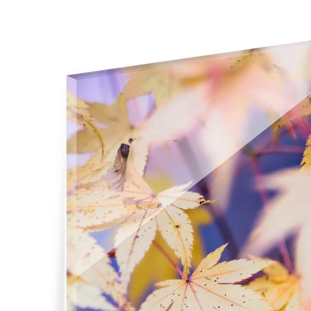 Glasbild - Herbstlicher Ahorn - Panel