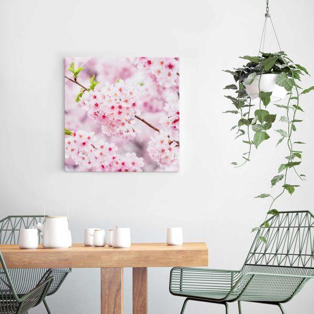 Glasbild - Japanische Kirschblüten - Quadrat 1:1