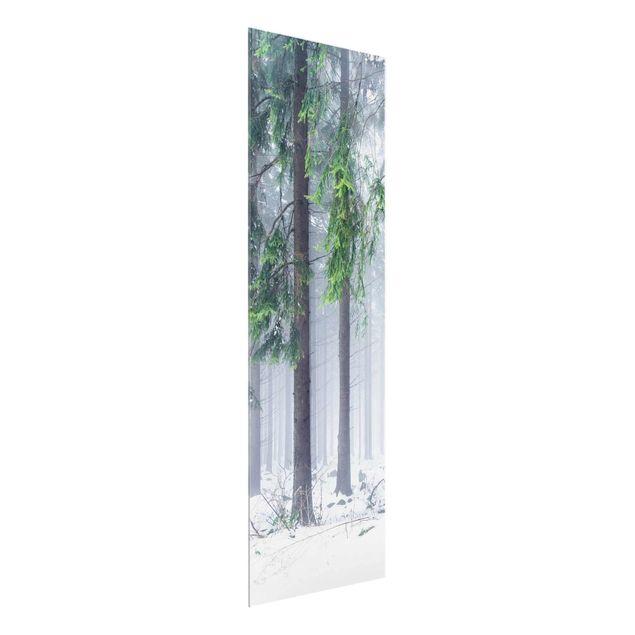Glasbild - Nadelbäume im Winter - Panel