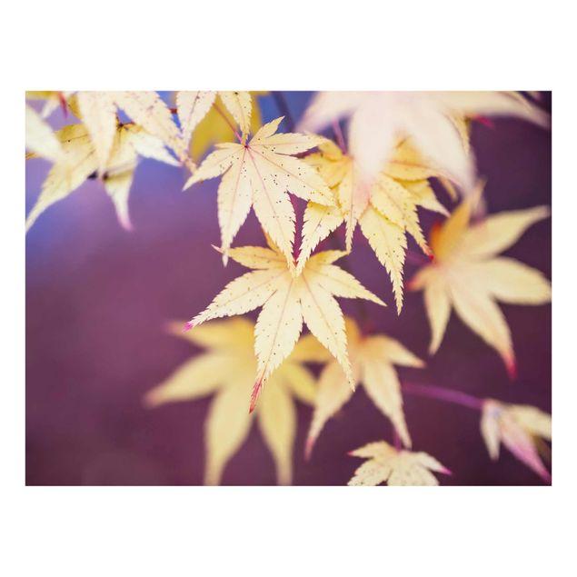 Glasbild - Herbstlicher Ahorn - Querformat 4:3