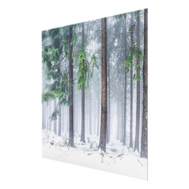Glasbild - Nadelbäume im Winter - Quadrat 1:1