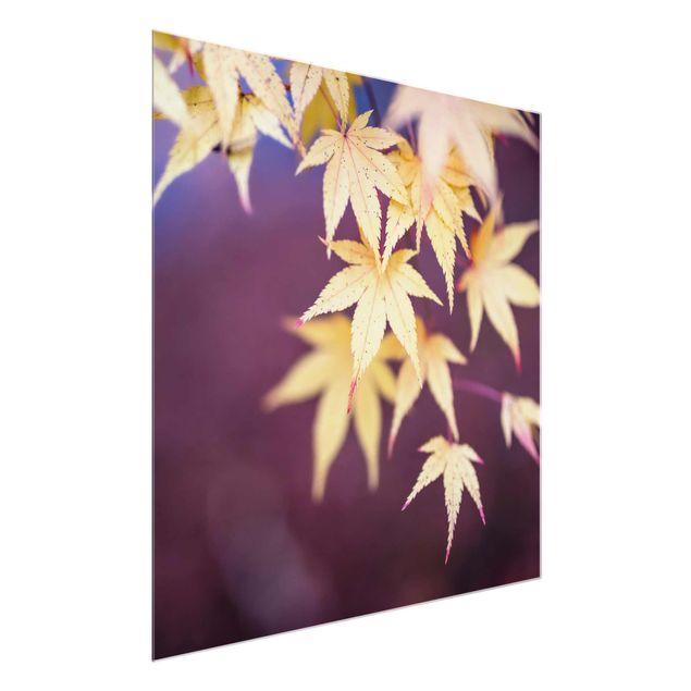 Glasbild - Herbstlicher Ahorn - Quadrat 1:1