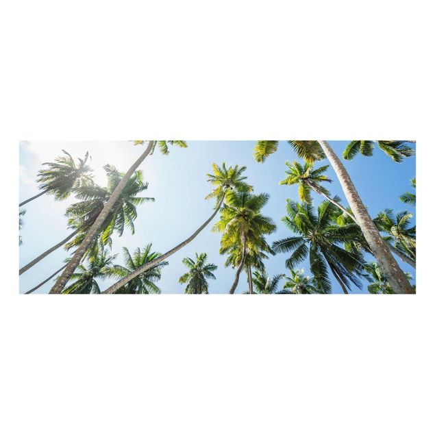 Glasbild - Palmen Himmel - Panorama