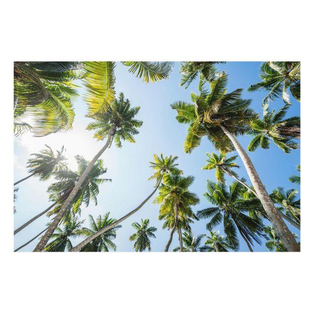 Glasbild - Palmen Himmel - Querformat 3:2