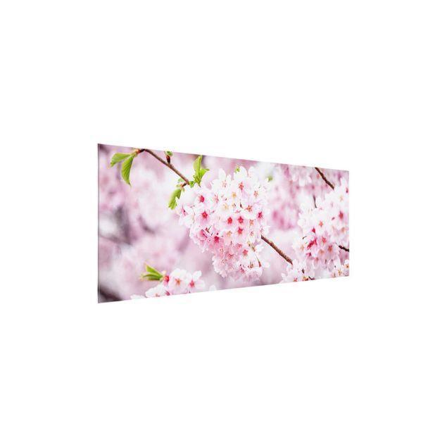 Glasbild - Japanische Kirschblüten - Panorama