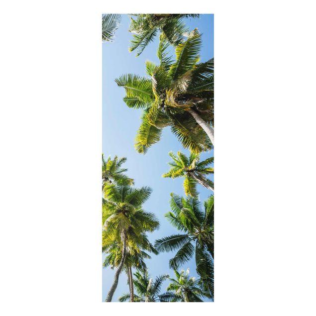 Glasbild - Palmen Himmel - Panel