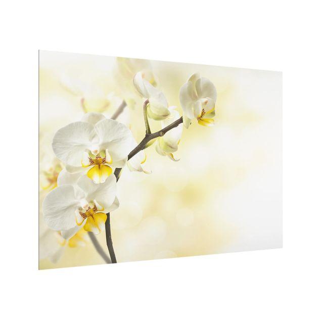 Glas Spritzschutz - Orchideen Zweig - Querformat - 4:3