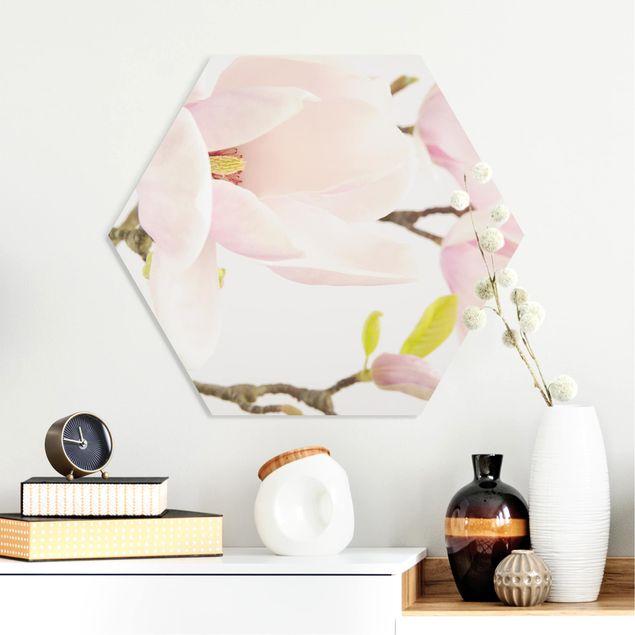 Hexagon Bild Forex - Royal Magnolia