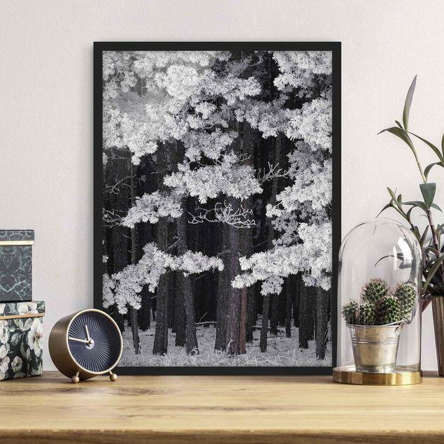 Bild mit Rahmen - Wald mit Raureif in Österreich - Hochformat 3:4