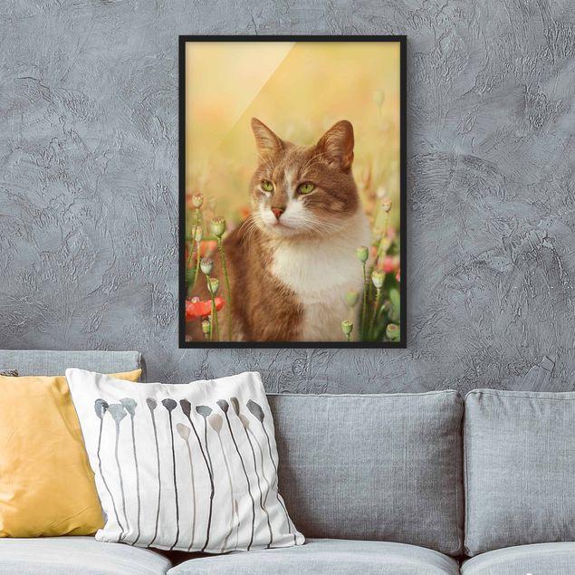 Bild mit Rahmen - Katze im Mohnfeld - Hochformat 3:4