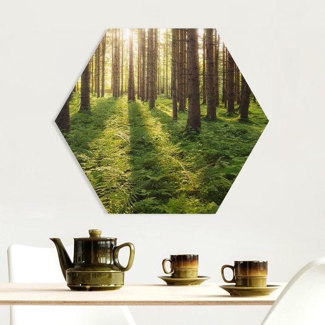Hexagon Bild Forex - Sonnenstrahlen in grünem Wald