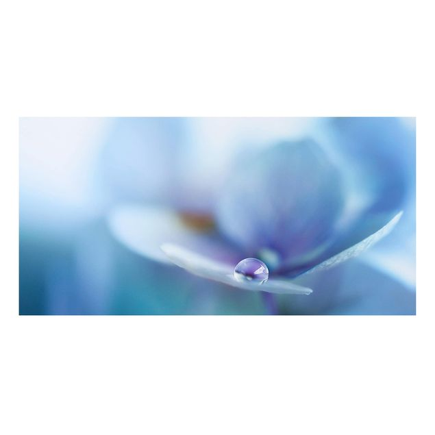 Forex Fine Art Print - Wassertropfen Hortensienblüte - Querformat 1:2
