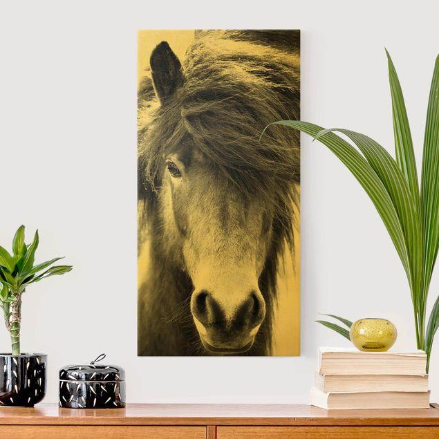 Leinwandbild Gold - Island Pferd in Schwarz-weiß - Hochformat 1:2