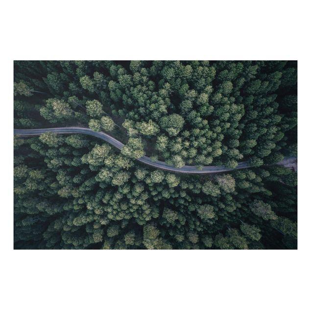Forex Fine Art Print - Luftbild - Waldstraße von Oben - Querformat 2:3