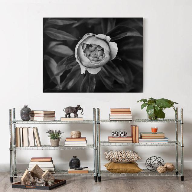Leinwandbild - Pfingstrosenblüte vor Blättern Schwarz Weiß - Querformat 3:4