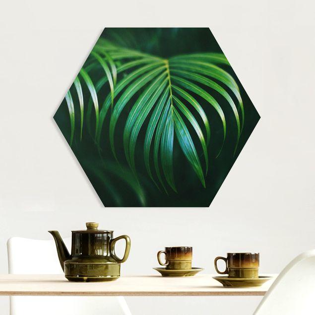 Hexagon Bild Forex - Palmenwedel