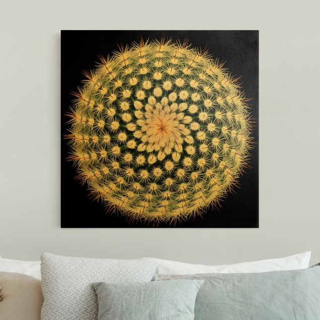Leinwandbild Gold - Kaktusblüte - Quadrat 1:1