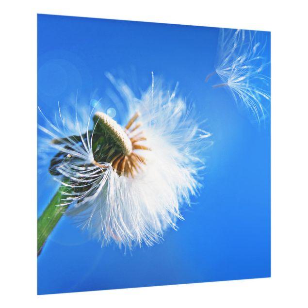 Glas Spritzschutz - Blown away - Quadrat - 1:1