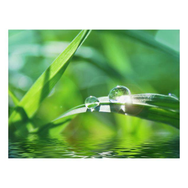 Glas Spritzschutz - Green Ambiance II - Querformat - 4:3