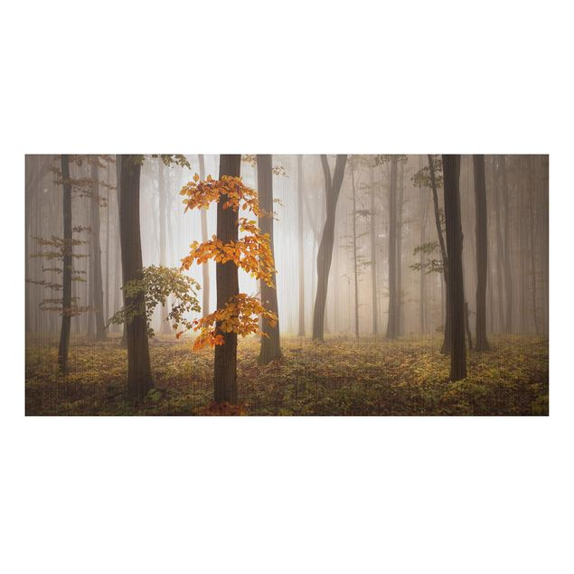 Alu-Dibond Bild - Novemberwald