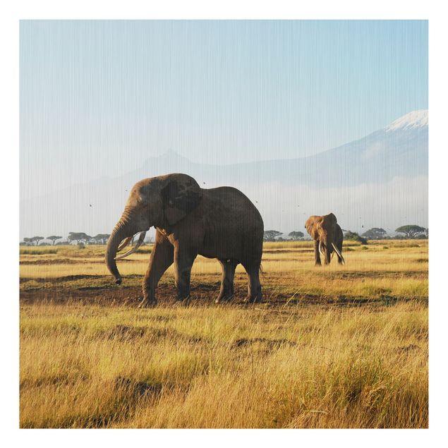 Alu-Dibond Bild - Elefanten vor dem Kilimanjaro in Kenya