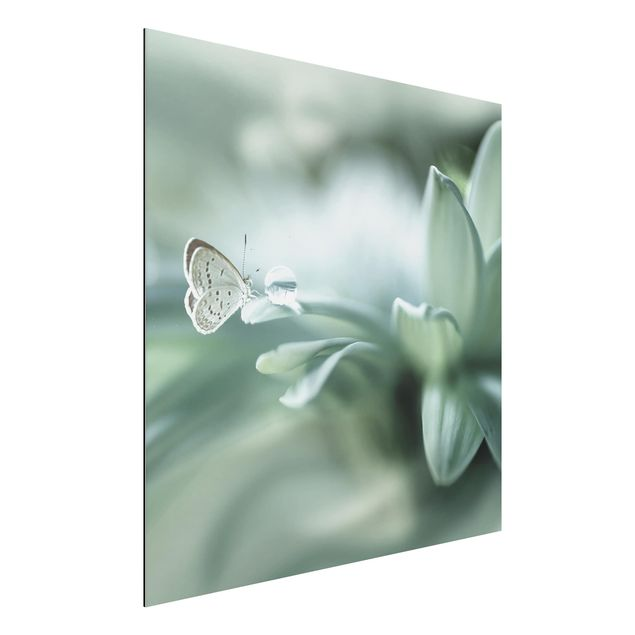 Aluminium Print - Schmetterling und Tautropfen in Pastellgrün - Quadrat 1:1