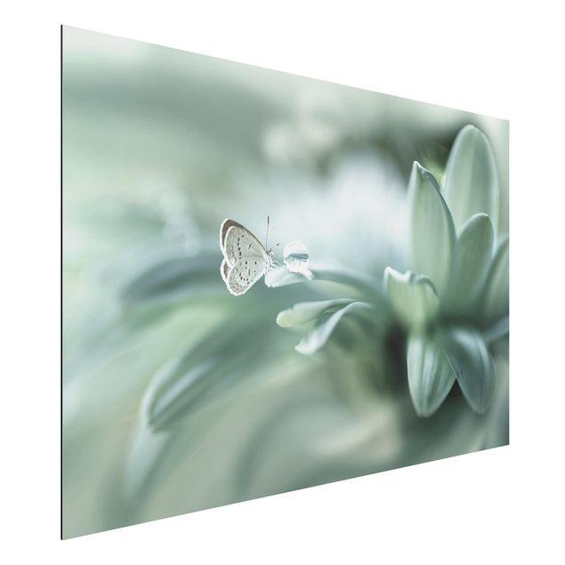 Aluminium Print - Schmetterling und Tautropfen in Pastellgrün - Querformat 2:3