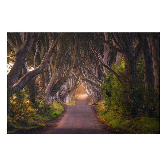 Alu-Dibond Bild - Tunnel aus Bäumen