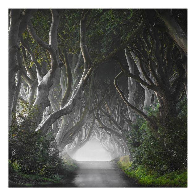 Alu-Dibond Bild - Wald in Nordirland