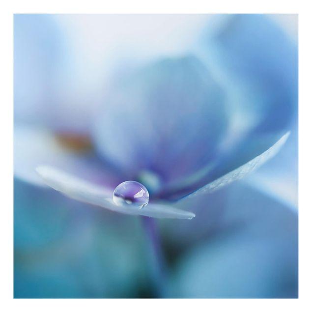 Aluminium Print - Wassertropfen Hortensienblüte - Quadrat 1:1
