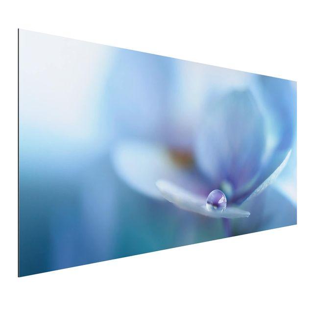 Aluminium Print - Wassertropfen Hortensienblüte - Querformat 1:2