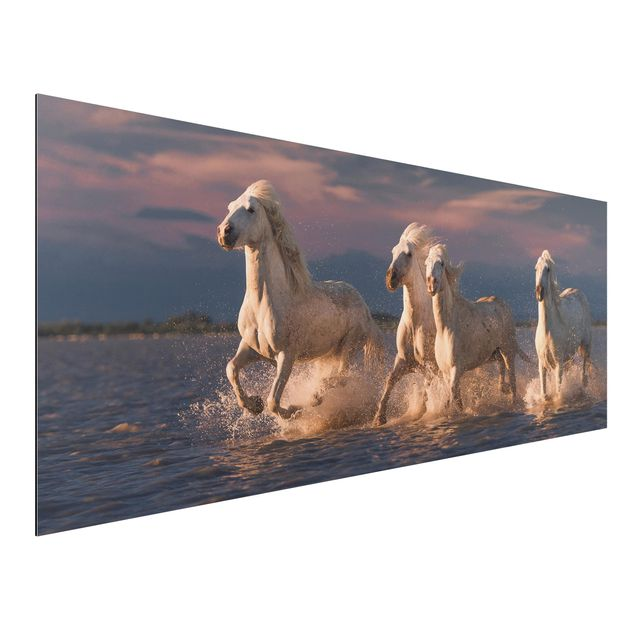 Aluminium Print - Wilde Pferde in Kamargue - Panorama