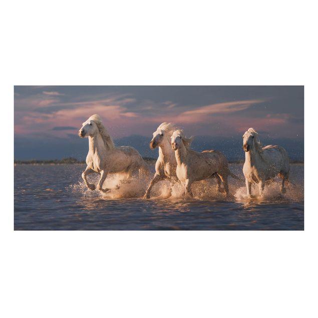 Aluminium Print - Wilde Pferde in Kamargue - Querformat 1:2