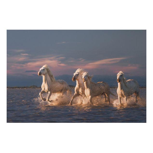 Aluminium Print - Wilde Pferde in Kamargue - Querformat 2:3