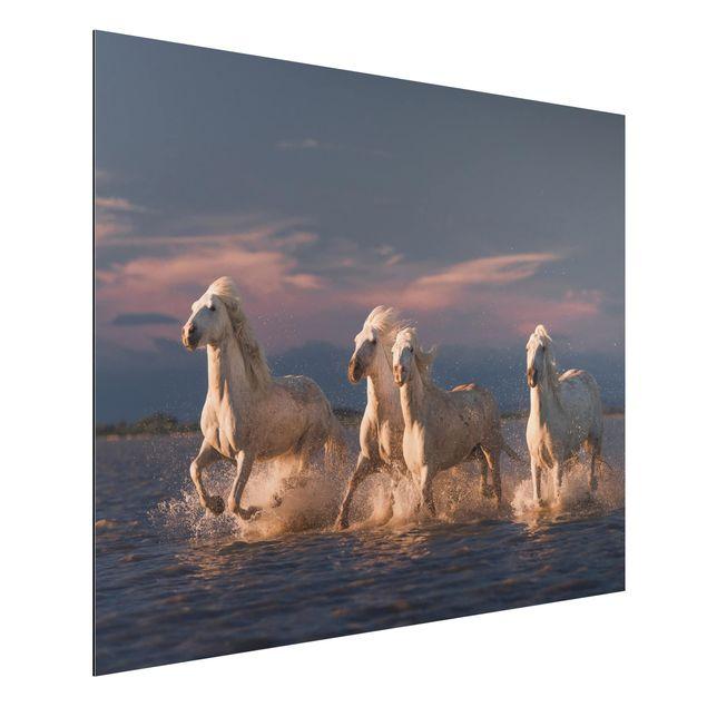 Aluminium Print - Wilde Pferde in Kamargue - Querformat 3:4