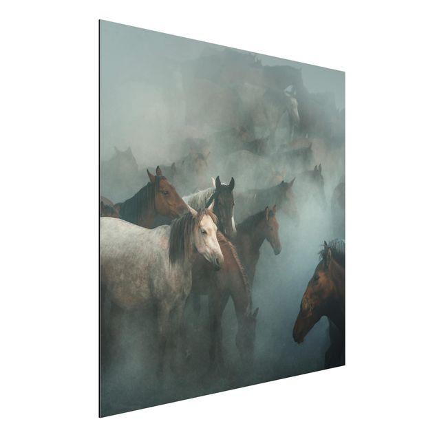 Aluminium Print - Wilde Pferde - Quadrat 1:1