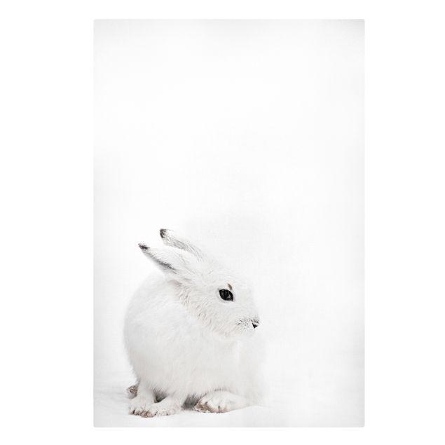 Leinwandbild - Arktischer Hase - Hochformat 2:3