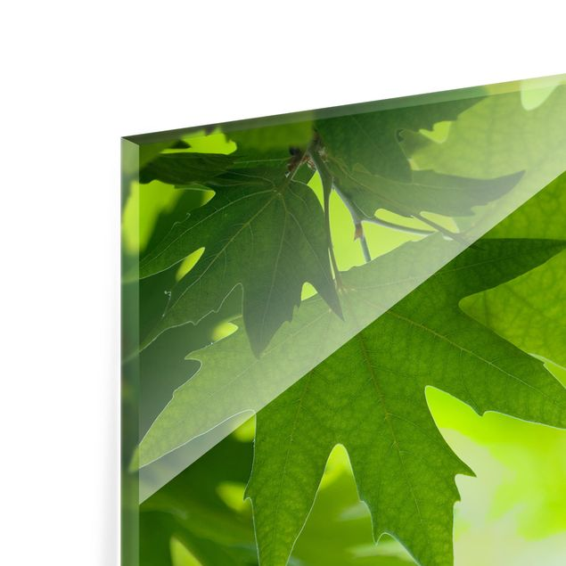 Glas Spritzschutz - Green Ambiance III - Quadrat - 1:1