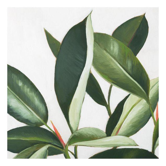 Glas Spritzschutz - Lieblingspflanzen - Gummibaum - Quadrat - 1:1