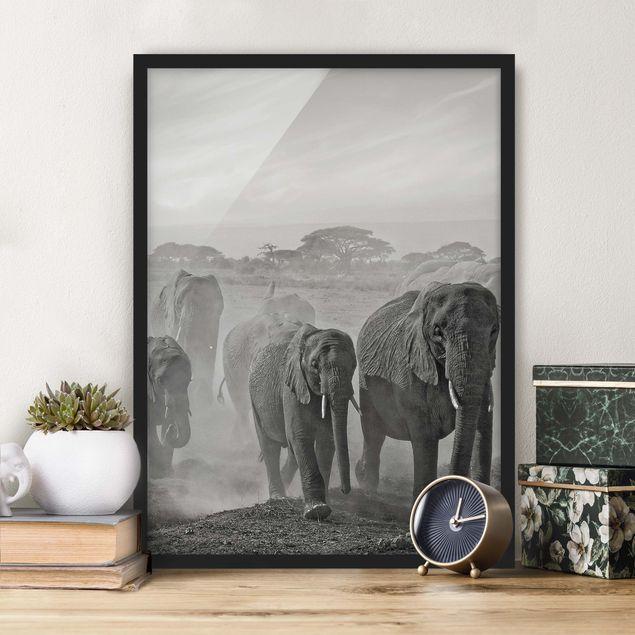Bild mit Rahmen - Elefantenherde - Hochformat 3:4
