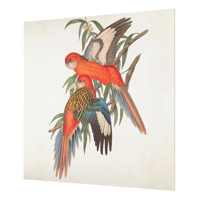 Glas Spritzschutz - Tropische Papageien I - Quadrat - 1:1